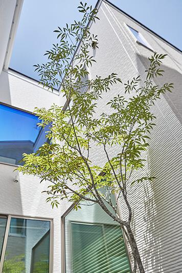 兵庫で中庭のある注文住宅2Fから眺める中庭